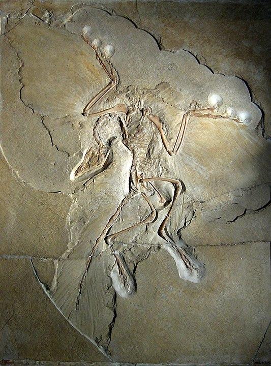 Останки Археоптерикса