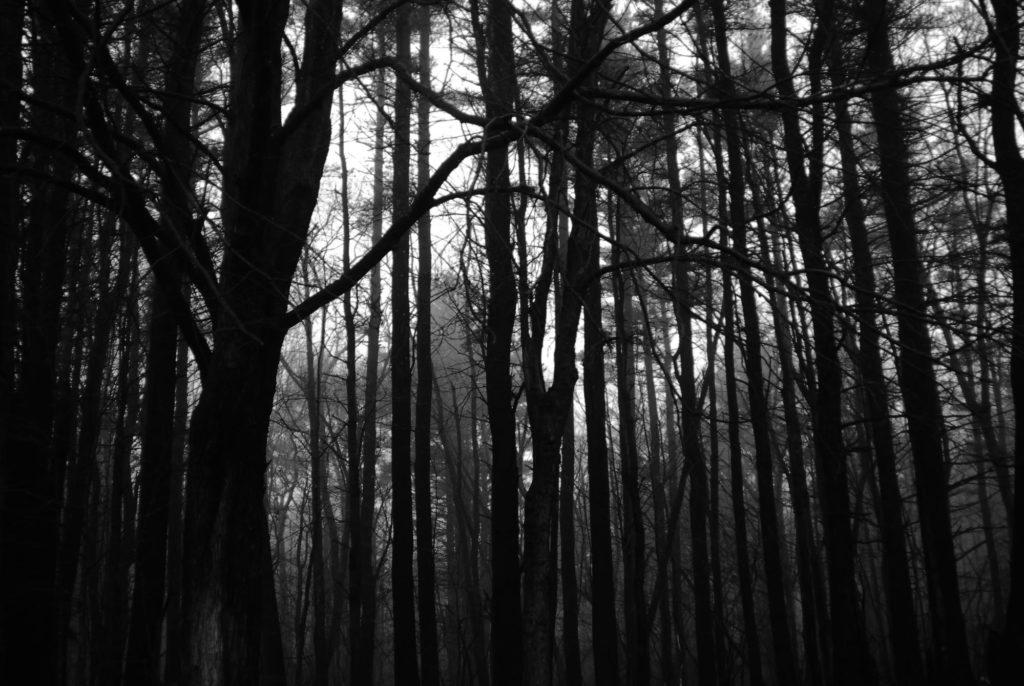 Лес — не столько метафора, сколько концепт хайдеггеровской философии.