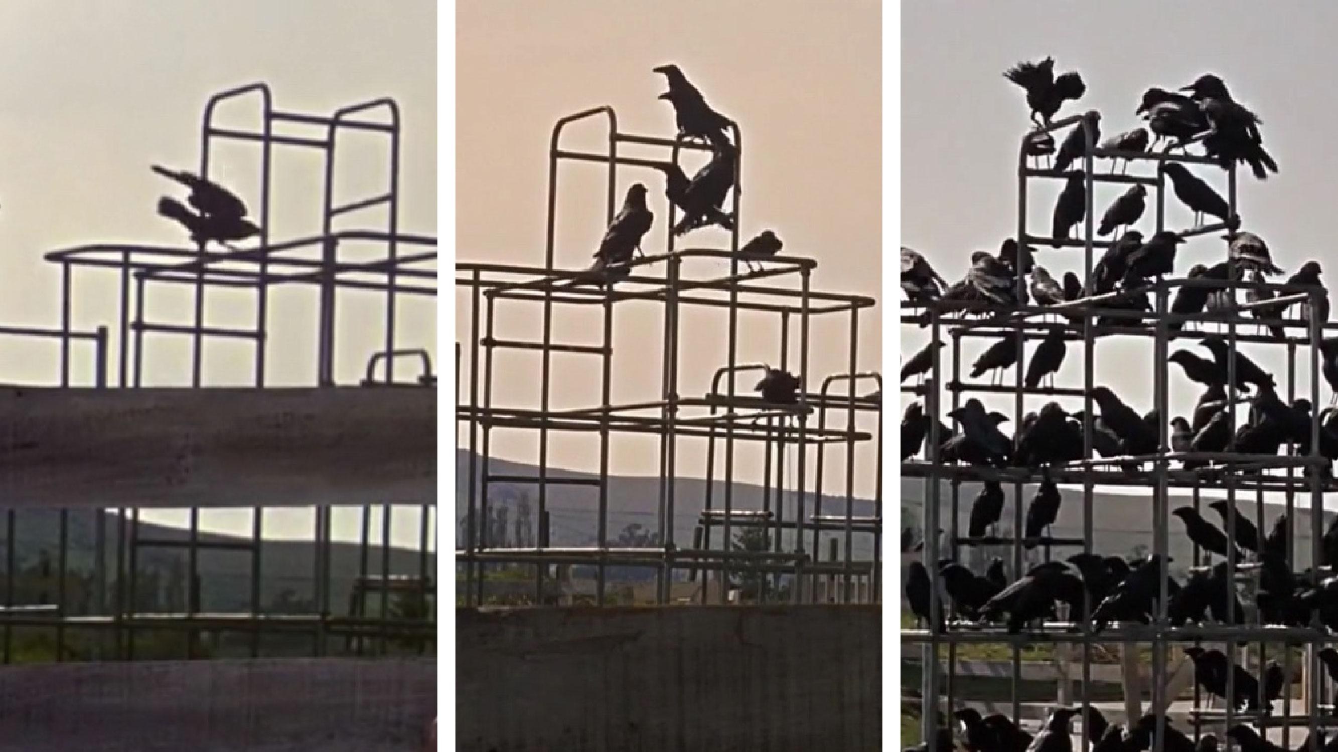 Умножение объектов (птиц) в преддверии нападения птиц на учеников школы