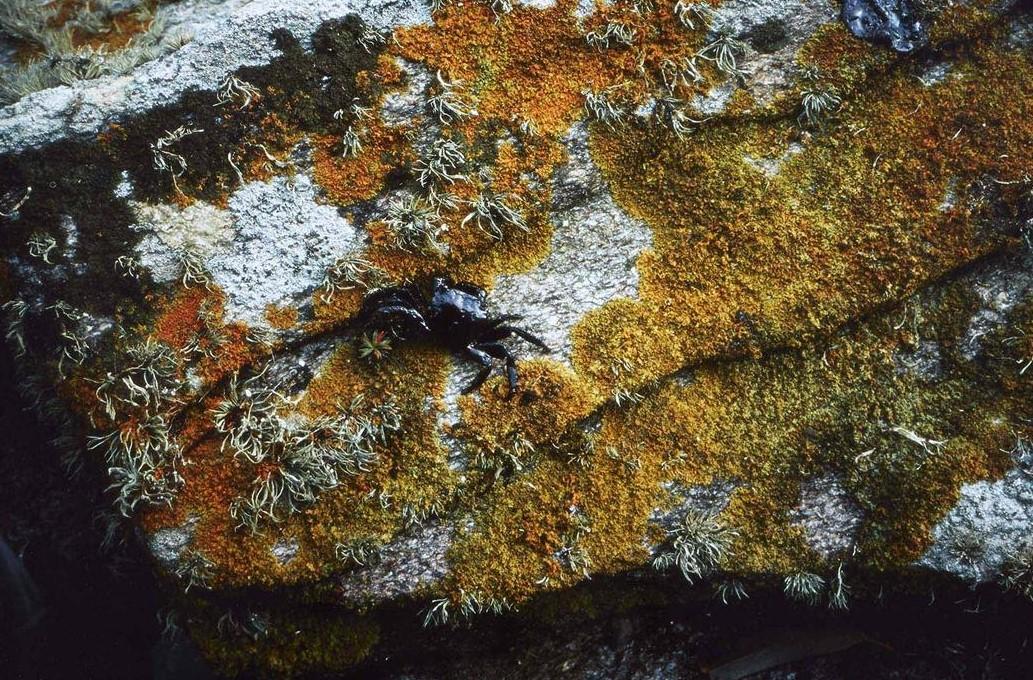 Allan Sekula. Black tide / Marea Negra, 2002 – 2003