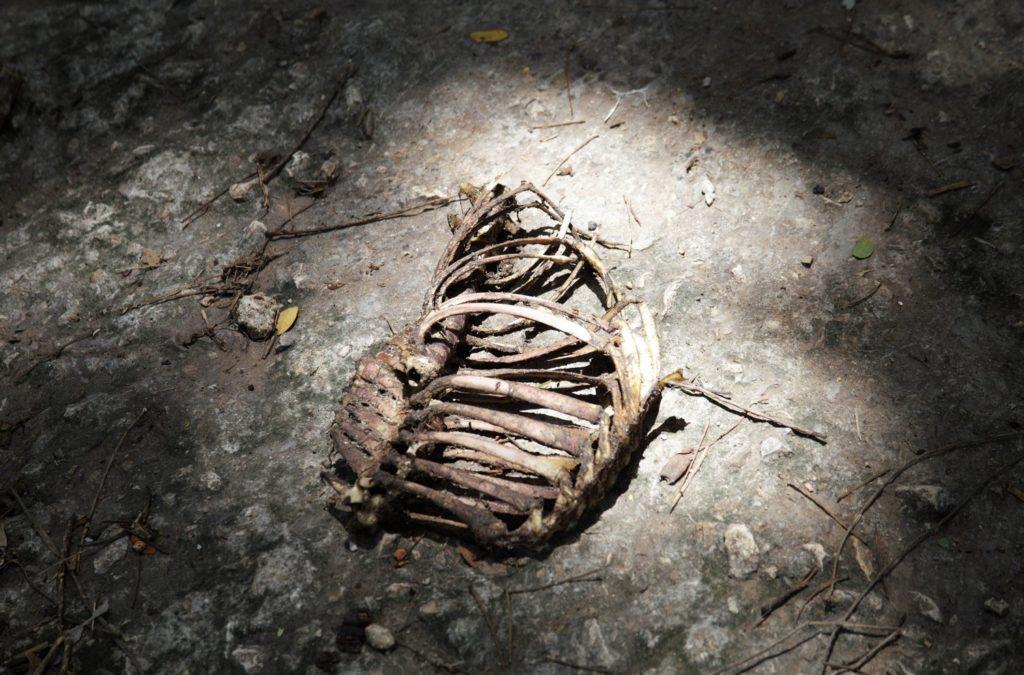 Остатки ритуальных подношений в парке Альмендарес. Фото автора