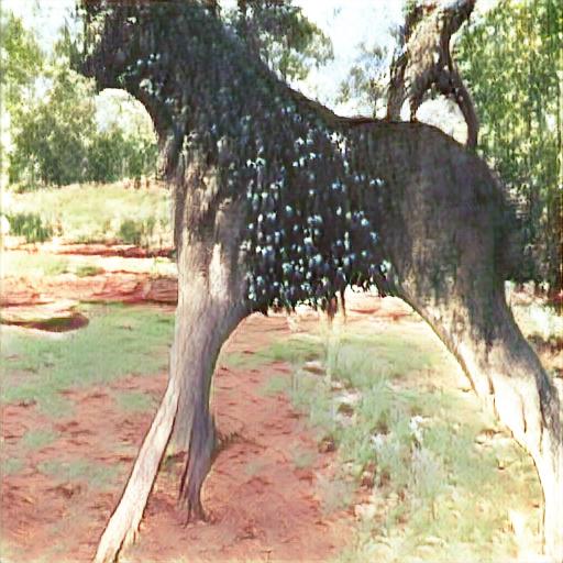 Wanari (mulga) tree в Алис-спринг, 26, 28.
