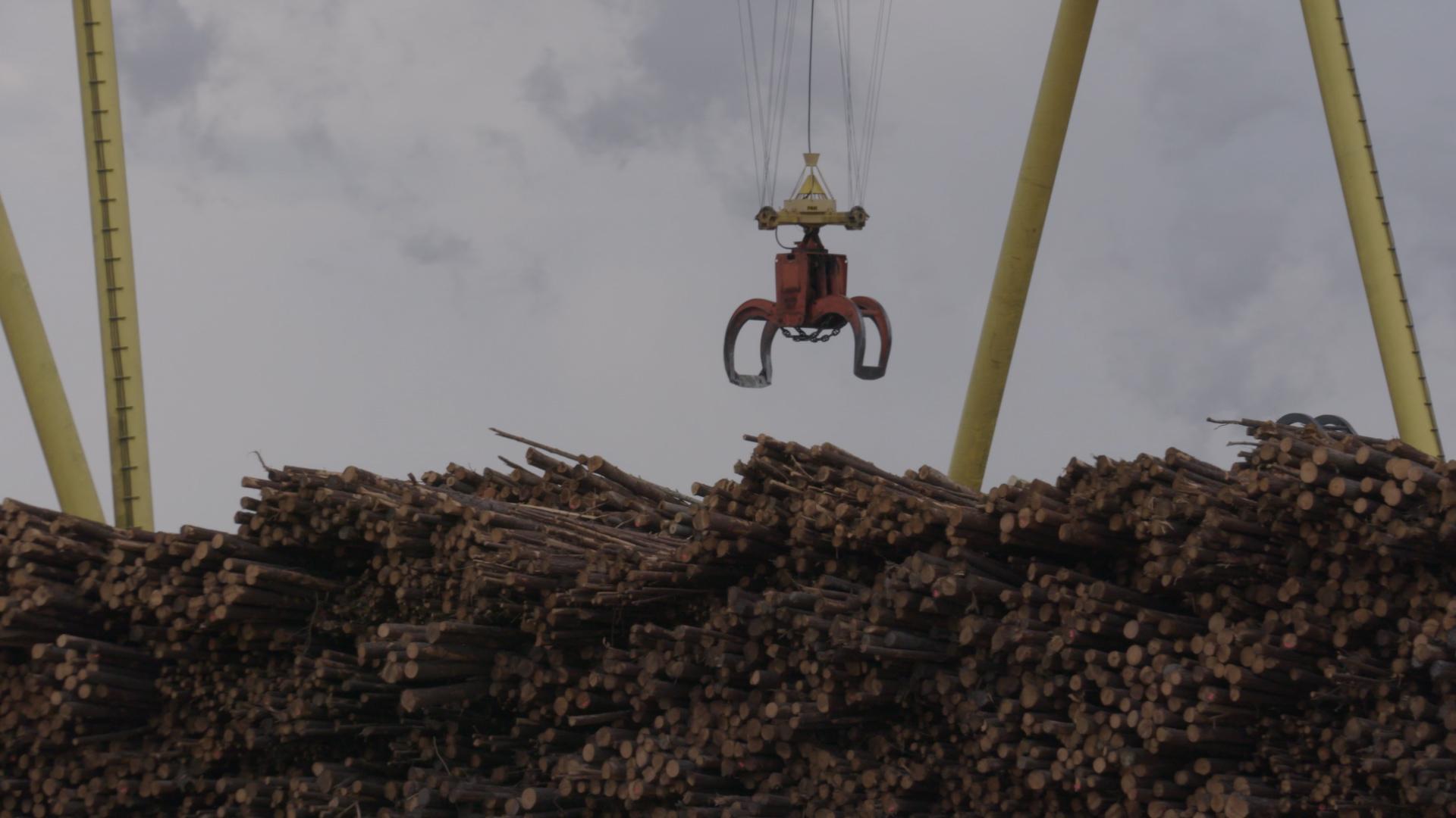 Кадр из проекта «Burned: Are Trees the New Coal?»