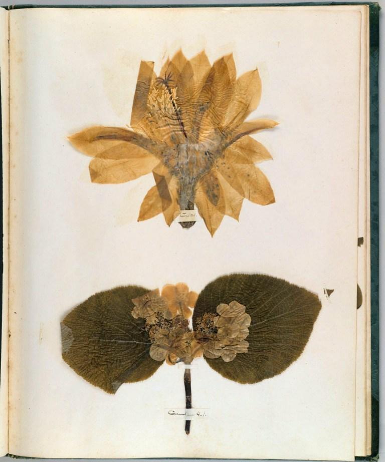 Из гербария Эмили Дикинсон