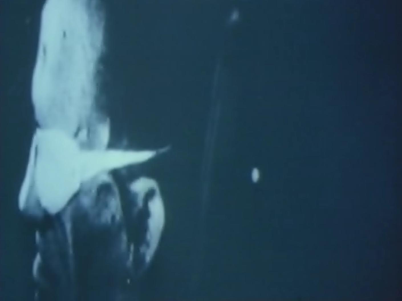 """Фрагмент из фильма """"Наш век""""."""