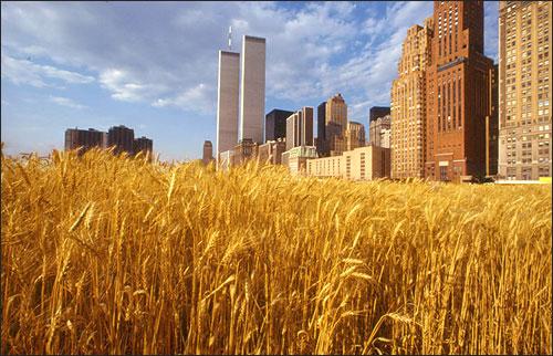 Агнес Денес. «Пшеничное поле — Противостояние». 1982 г., Нью-Йорк.