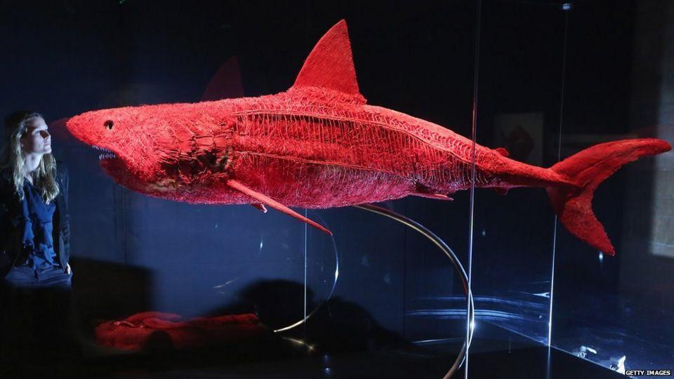 Гюнтер Фон Хагенс. Акула на выставке в Музее естественной истории. 2012.     <a>Источник фото</a>