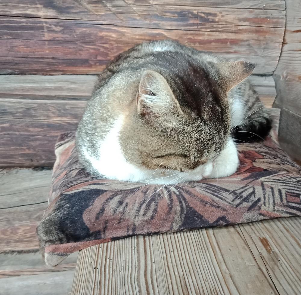Кот, встречающий посетителей в одной из изб музея деревянного зодчества