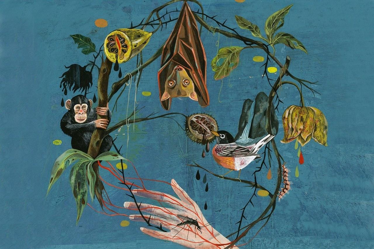 """Олаф Хайек (Olaf Hajek). Экология трансмиссивных заболеваний. Иллюстрация для """"Воскресного обозрения"""" Нью-Йорк Таймс. Изо"""