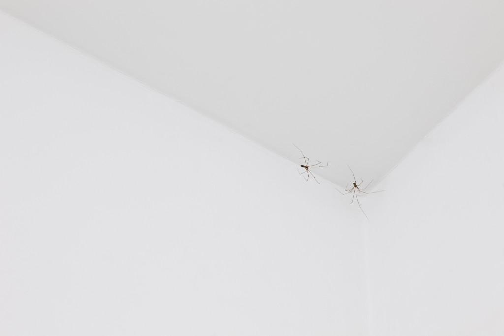 Pierre Huyghe, C.C. Spider, 2011