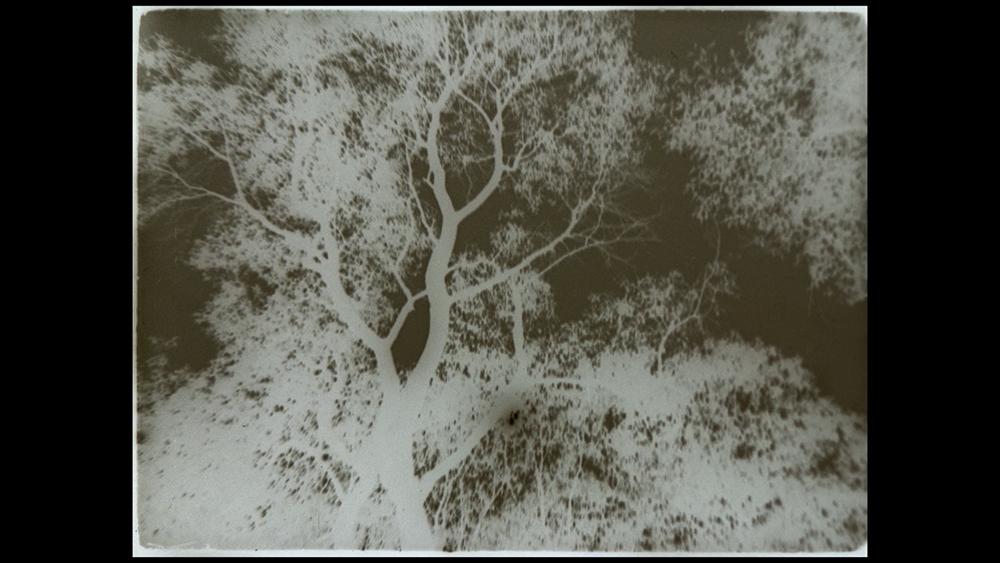 Кадр из фильма Ritual of Relatedness