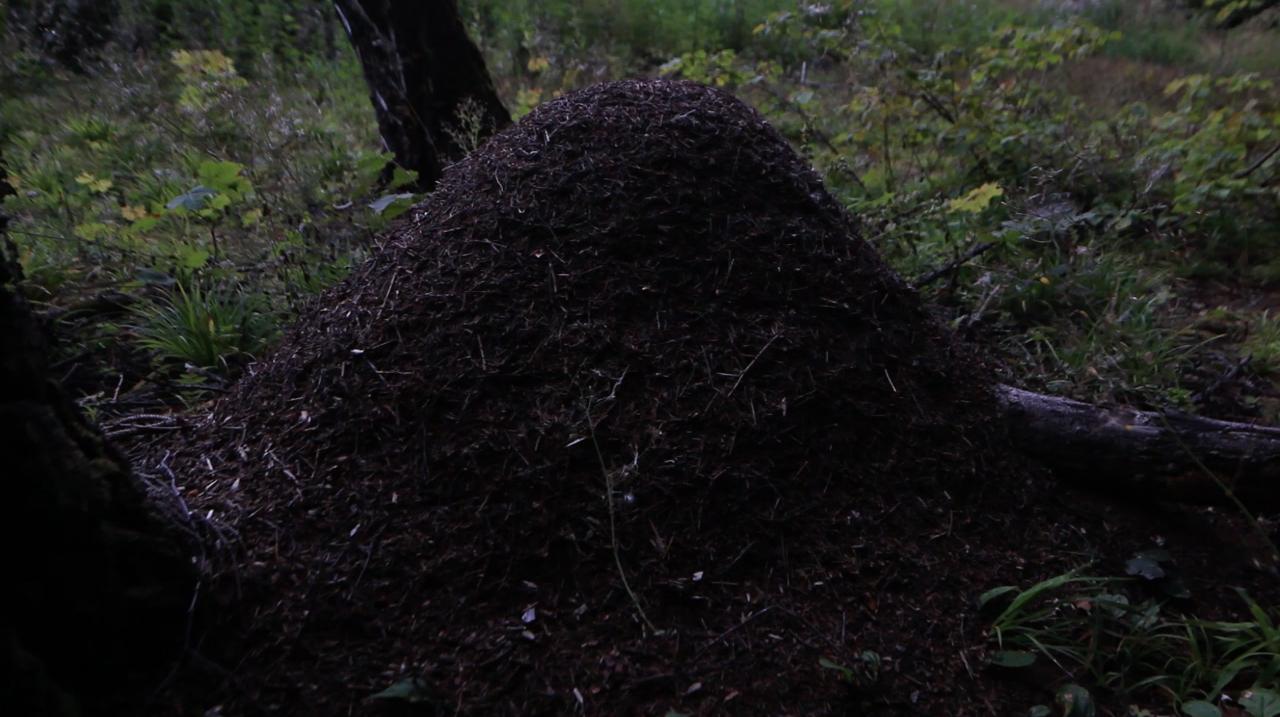 «Гиннунгагап». Кадр из видео