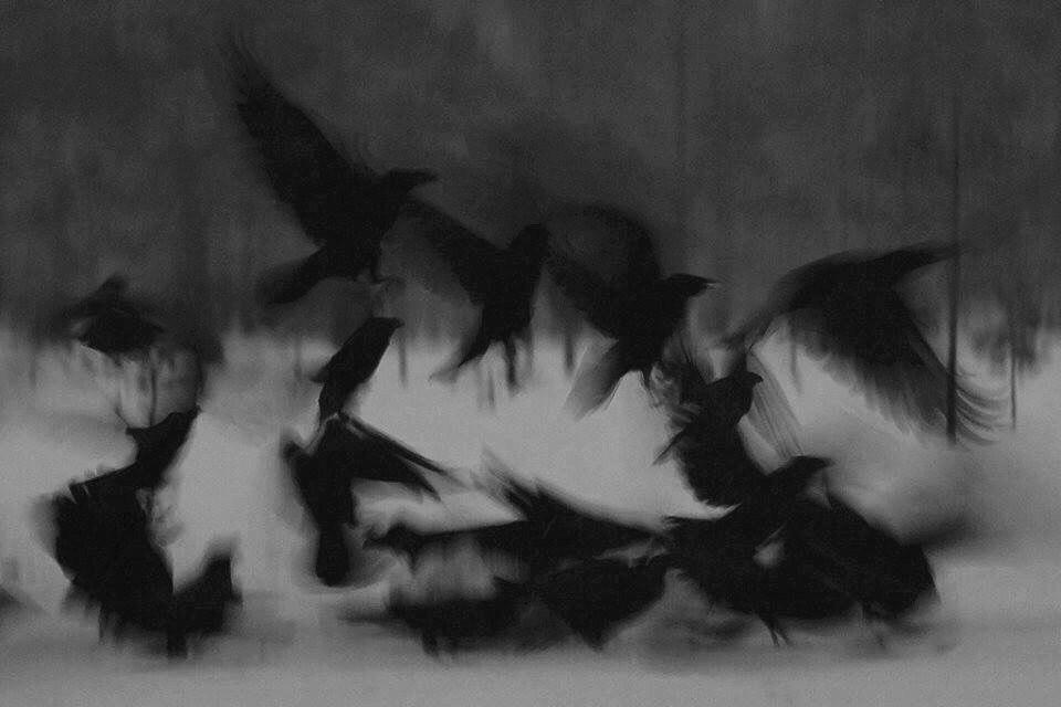 """<i>""""В один миг мне почудилось, что птицы были всего лишь сном. Так бывает. Почему бы не быть такому странному сну?""""</i>"""