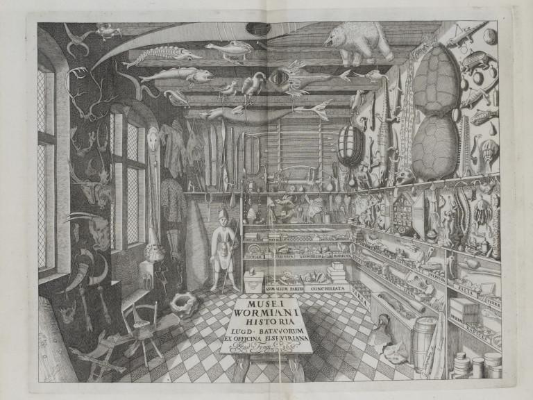Иллюстрация Оле Ворма, на которую ссылается в своем тексте Джорджо Агамбен, когда говорит о кунсткамерах. <a>Источник</a>