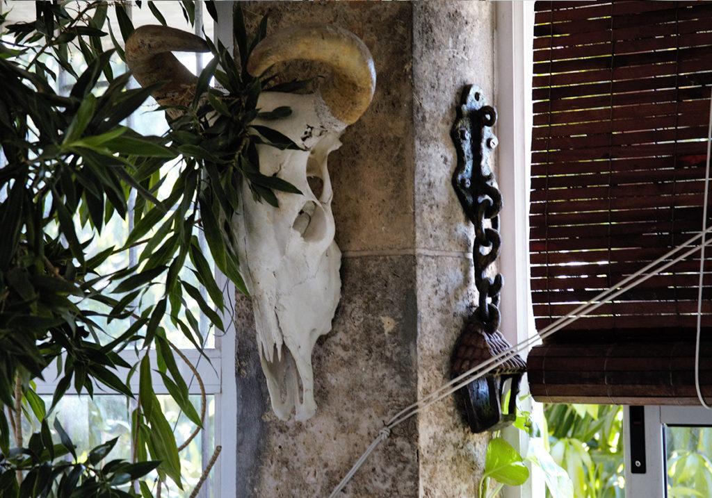 Черепа животных - частый атрибут афро-кубинских культов. В доме Натали Боливар. Архив автора.