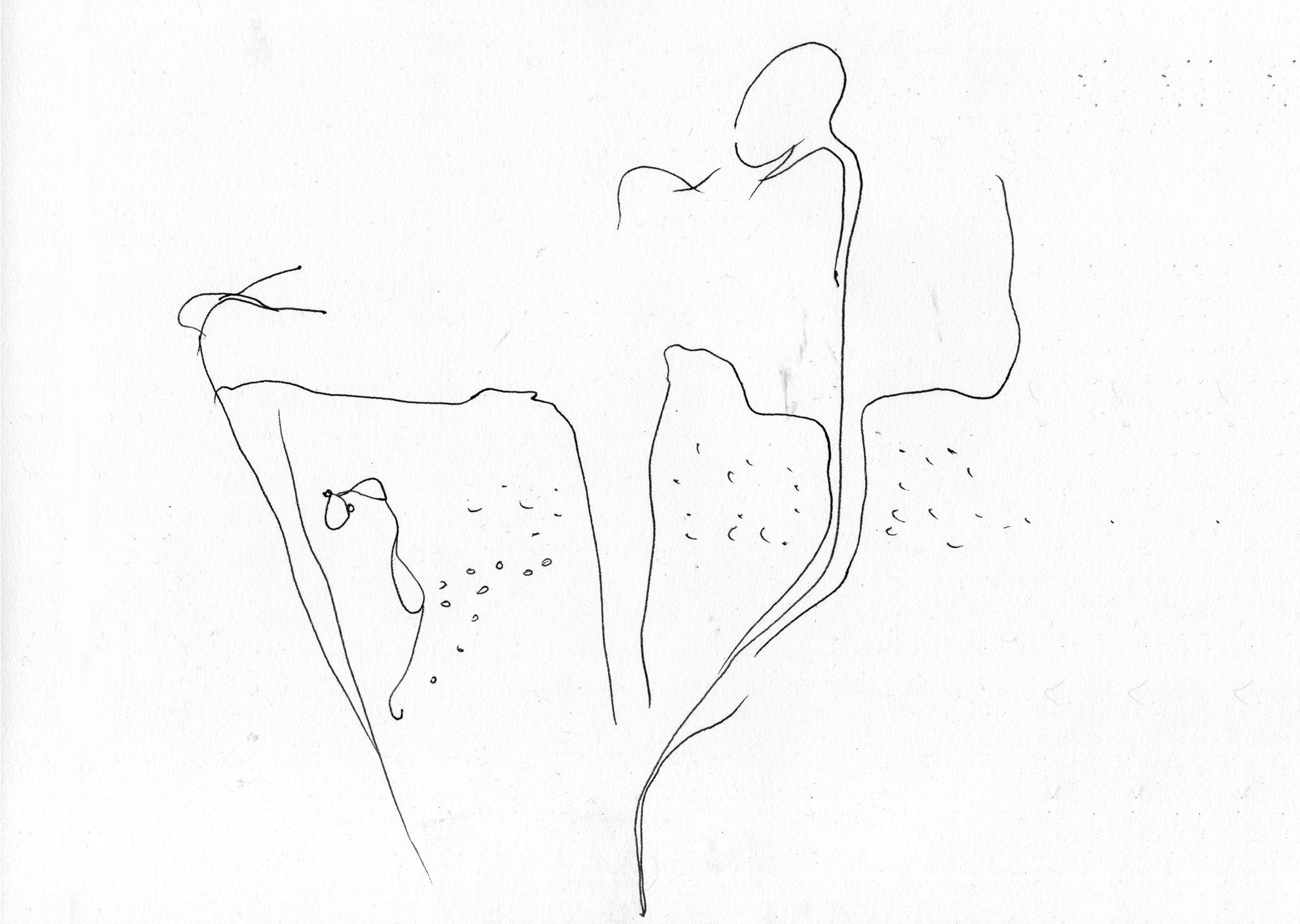Иллюстрации Алены Петит