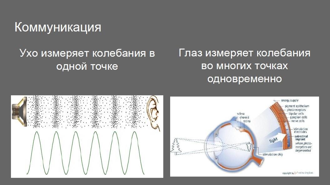 Чем отличаются уши от глаз?