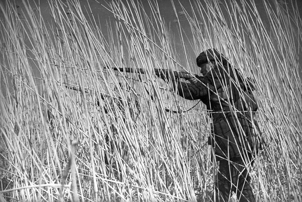 Снайпер в камышах. Фото – Евгений Халдей.