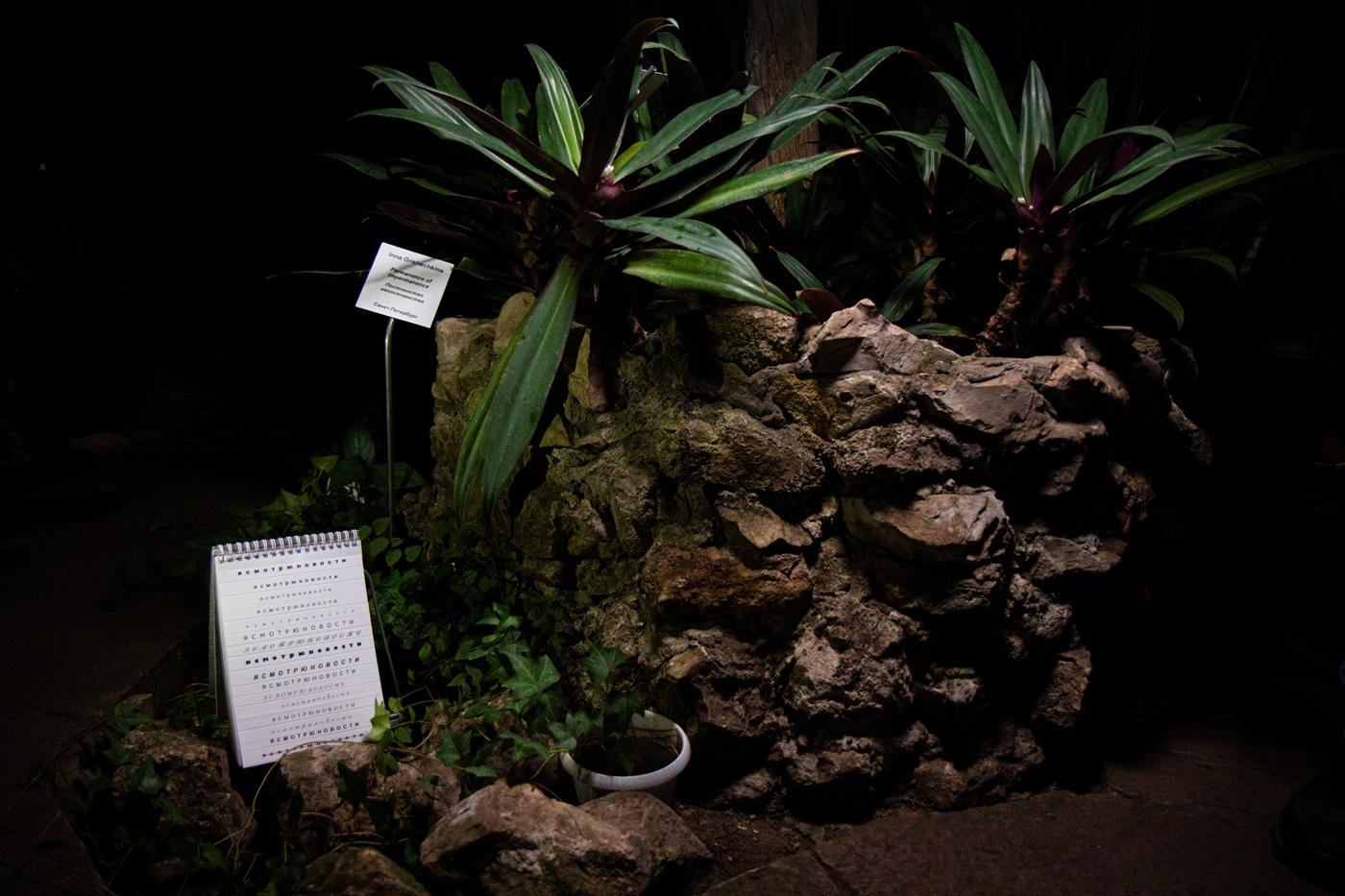 Вид на экспозицию выставки «Повседневные эпизоды», оранжерея ботанического сада Самарского университета. Автор фото - Кри