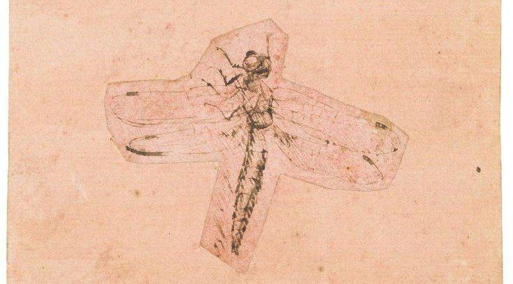 """Fragment of Leonardo's """"Two Studies of Insects"""" (study of a dragonfly)– Museum of Fine Arts"""