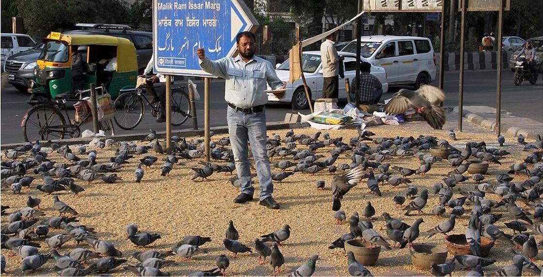 Голубиное пастбище, Нью-Дели, Индия.