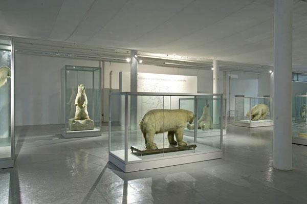<b>Илл. 8.</b>Нанук: плоский и синий. Культурная жизнь полярных медведей. 2001-2006. Авторы проекта и съемки: Брандис С