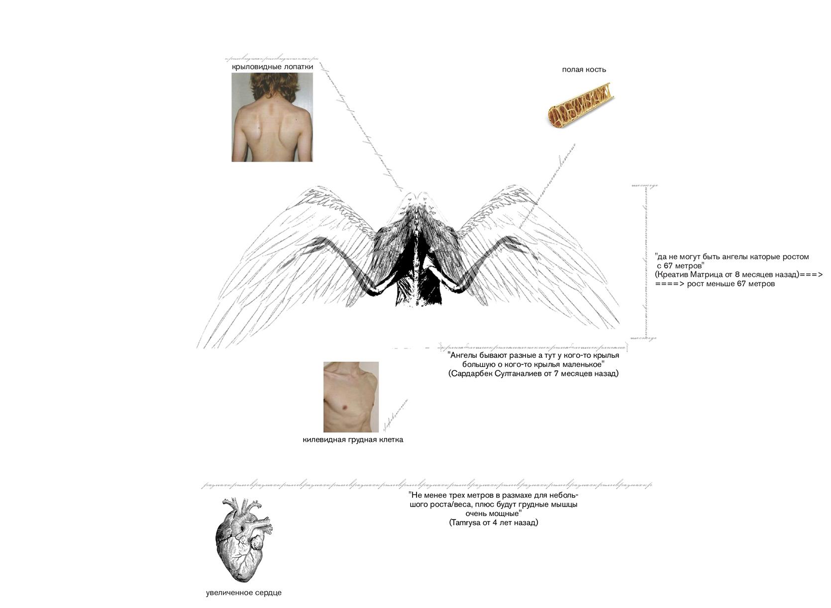 Первый анатомический уровень. Ангельская природа на пути нашего знания об анатомии